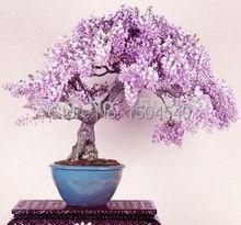 4popular bosai tree seeds total more than 60 seeds mini bonsai seeds Premium Bonsai Package Best Deals
