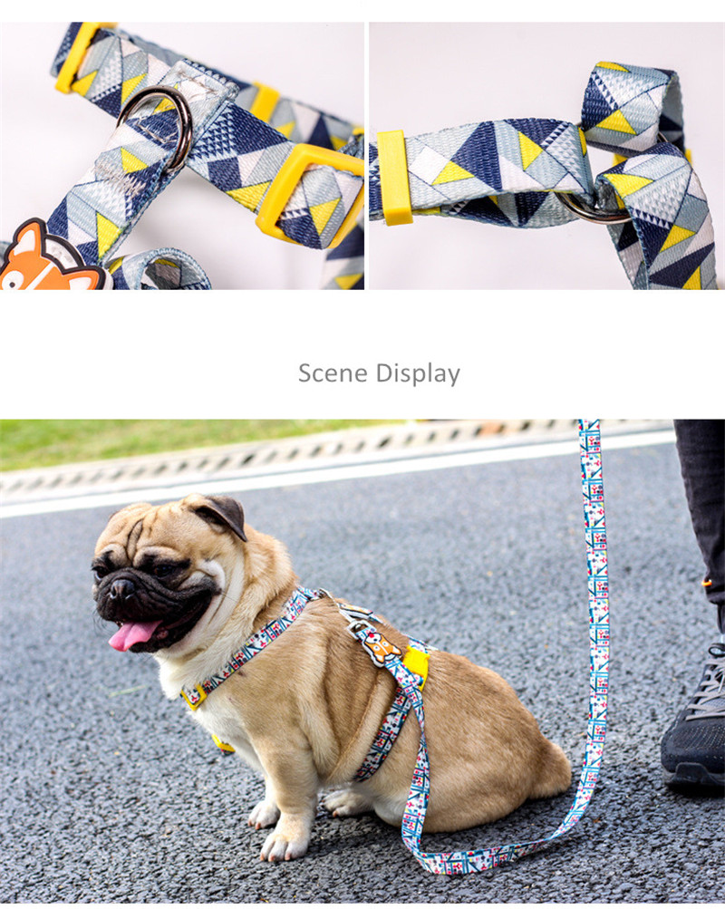 Dog Collars  (20)