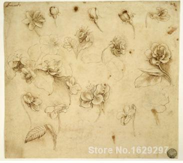 Portrait Painting Study of Flowers by Leonardo Da Vinci Canvas High quality Hand paintedPortrait Painting Study of Flowers by Leonardo Da Vinci Canvas High quality Hand painted