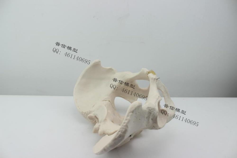 Atemberaubend Ilium Knochenanatomie Galerie - Anatomie Ideen ...