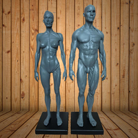 1 6 30cm Life Size Human Anatomy Male Flesh Anatomy Comparative Anatomy Set Skull Brain Skeleton