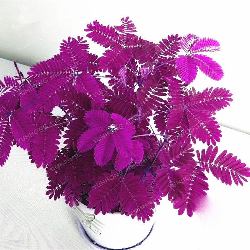 Мимоза стыдливая Линн стыдливая трава бонсай Листва Мимоза стыдливая чувствительной бонсай растение для домашнего сада 30 шт.