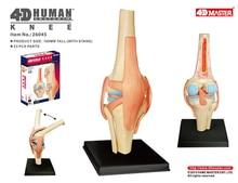 نموذج تشريح الركبة البشري الرئيسي 4D نموذج للأعضاء البشرية التدريس الطبي لتقوم بها بنفسك العلوم