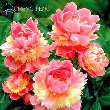 Semente * ชิ้น/ถุงดอกโบตั๋นพืชสวนจีนบอนไซดอกไม้ดอกโบตั๋นพืชกระถางที่สวยงามพืชบอนไซสำหรับหน้าแรก ในร่ม