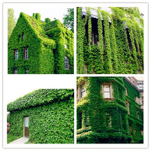 20pcs/bag ivy seeds japanese Creeper Seeds  Green Grass Seed Anti-radiation ultraviolet ray bonsai climbing plants for garden