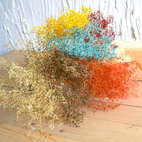 Dried Flowers Mantianxing Bountyless Home Decoration Props Diy Model Material Handmade