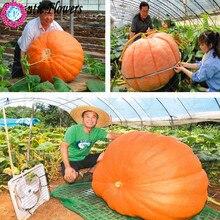Buy  food NON-GMO Edible plants for home garden  online