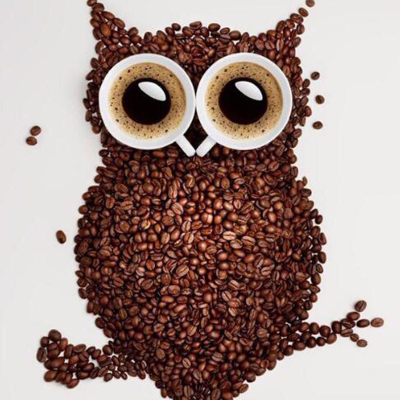 Coffee Beans Owl 5d Diy Diamond Painting Diy Diamond Painting