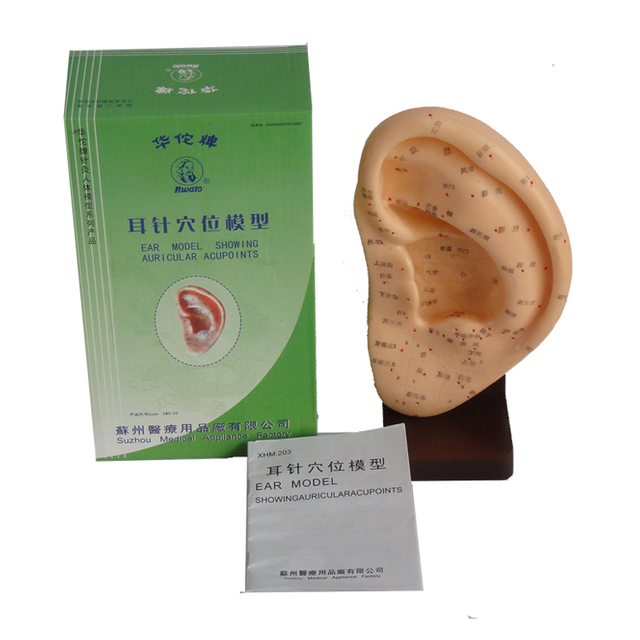 22cm ear acupuncture model showing auricular acupoints with base ear model ear massage model