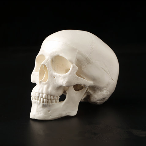 1PCS Mini Skull Human Anatomical Anatomy Head Medical Model Convenient 92x99x71mm Home Decoration|Statues & Sculptures| |  - title=