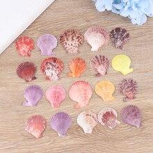 20 шт серьги-ракушки Декор Орнамент красочные натуральные ракушки украшения
