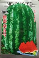 1 original pack 30+ Shiny Boy Hybrid Watermelon Seeds,fruit seeds Home Garden Vegetable Seeds free shipping