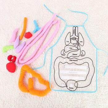 Kids Educational Toy Anatomy Apron  3