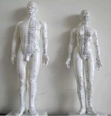 50CM English human acupuncture meridian points model male or female acupoint model with user manual