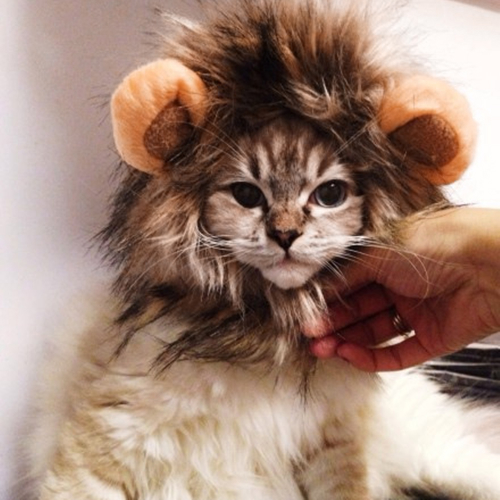 Pet Lion Halloween Costume  2