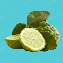 30Pcs Citrus Aurantifolia Key Lime Seeds