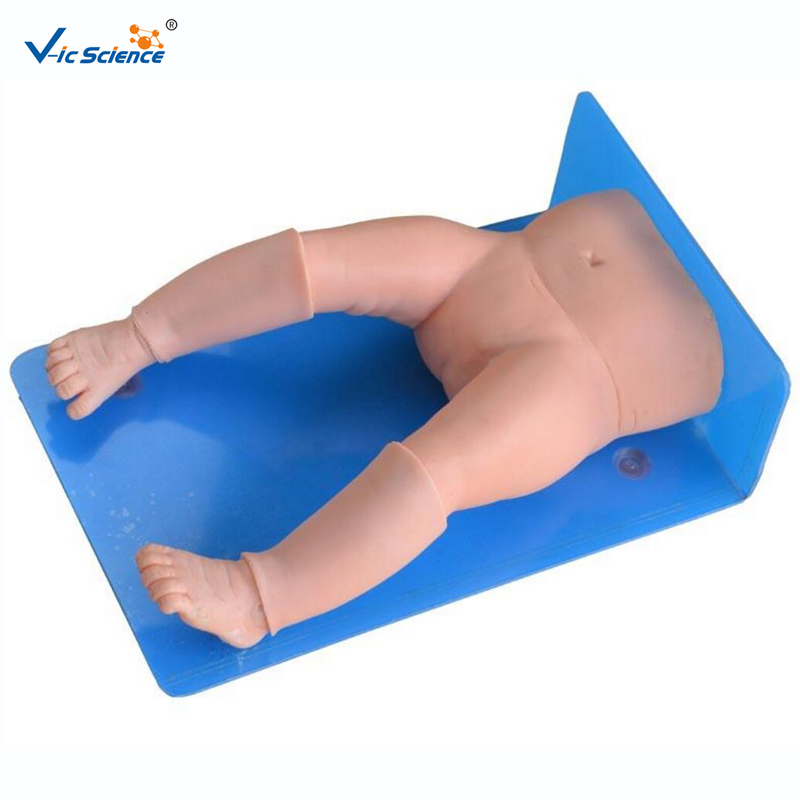 Medical  Education Advance Infant Bone Marrow Aspiration Training Simulator Model Medical  Education Advance Infant Bone Marrow Aspiration Training Simulator Model