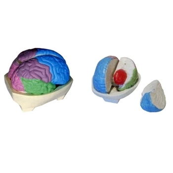 Brain lobes model Anatomy of the brain Brain teaching simulation equipment 21.5*17*14cm free shipping