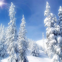 Winter Scenic Photography Backdrops Printed Blue Sky Sunshine Thick Snow Covered Pine Trees Kids Holiday Photo Shoot Backgrounds