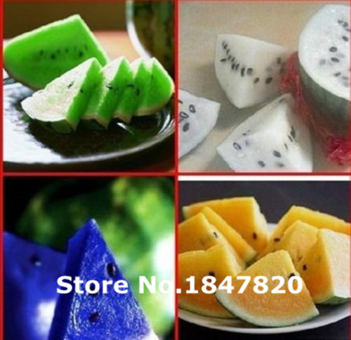 New Rare 50 Pcs 5Kinds Very Sweet Watermelon Seed Fruit Seeds Yellow Red Blue White Green