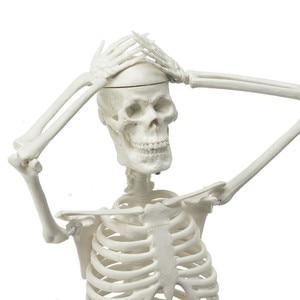 Image 2 - High Quality 45CM Human Anatomical Anatomy Skeleton Model Medical Learn Aid Anatomy human skeletal model Wholesale Retail