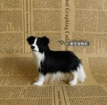 simulation dog Border Collie model polyethylene& fur 10x8cm handicraft,prop,home Decoration toy xmas gift b3624