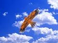Brinquedos grande águia pipa com corda e punho novidade brinquedo asas de Eagles grande vôo para presente