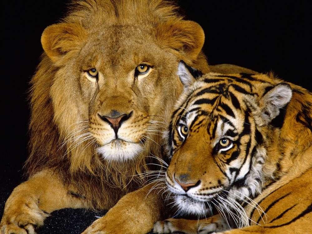 Обои На Телефон Андроид Животные