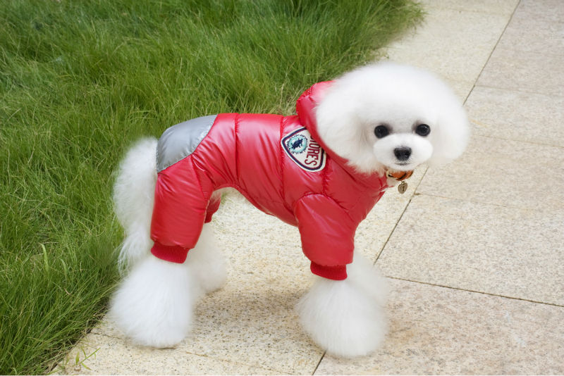 Y122_New_arrival_Winter_Pet_Dog_Cotton_Clothes_Super_warm_Puppy_dog_Four_Legs_Ski_suit_Costume_Clothes_Chihuahua_ (1)