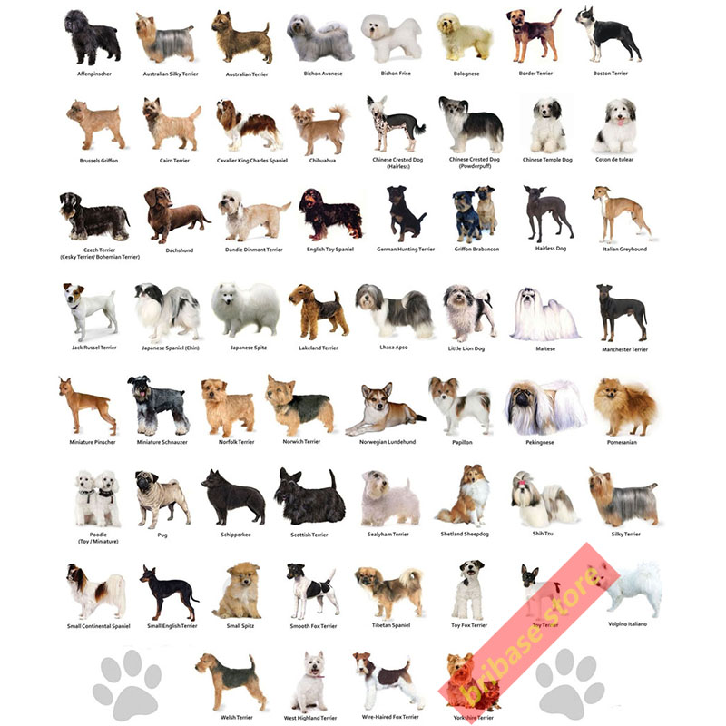 an analysis of the classification of the three categories of types of dogs In machine learning and statistics, classification is the problem of identifying to which of a set of categories (sub-populations) a new observation belongs.