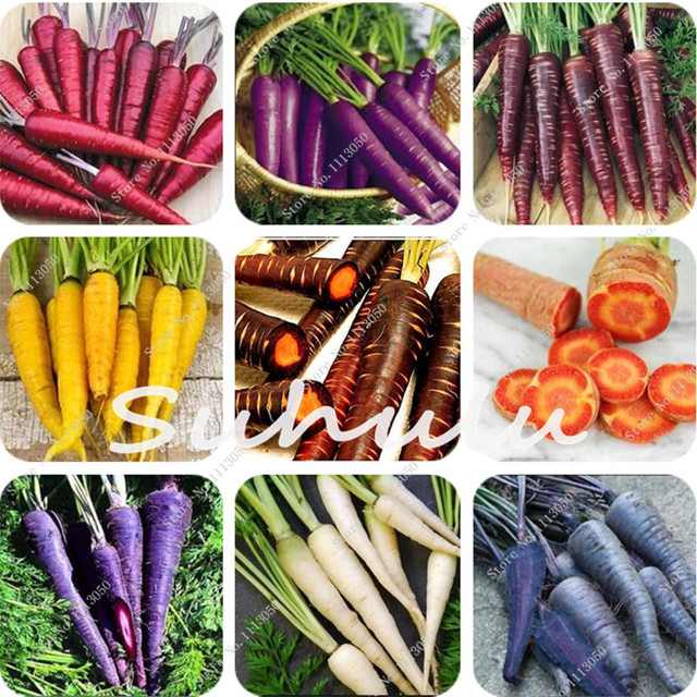 ¡Caliente! 200 piezas Multi Color zanahoria bonsái plantas de frutas frescas saludables para cocinar, hervidor hogar jardín semillas