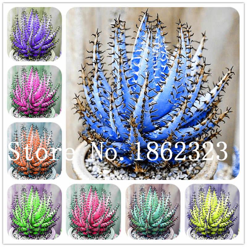 200 pcs/bag Aloe vera flores,rare herb plantas Tree plante bonsai plants for home and garden DIY,edible Beauty cosmetic use