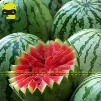 Sweet Beauty Bright Red Watermelon Seed, 5 Seeds/Pack, Low-sugar Organic Fruit Seed Easy Care Plants