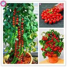 Buy  able Fruit Plant Bonsai,potted home&garden  online