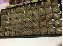 5 unids/lote, bandeja de plántulas PS más gruesa de 1mm, 150 g/pc, compartimentos caja de planta de semillero, jardín. pellete de semillas. bandejas semillero