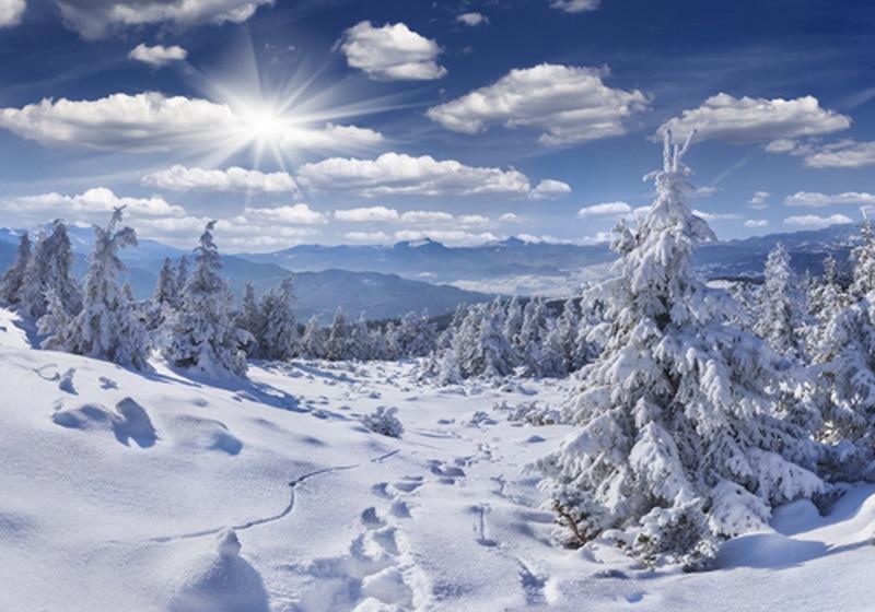 winter snow scene print photography backdrop  Art fabric christmas photography backdrop D-6907 weagle 2280 scene