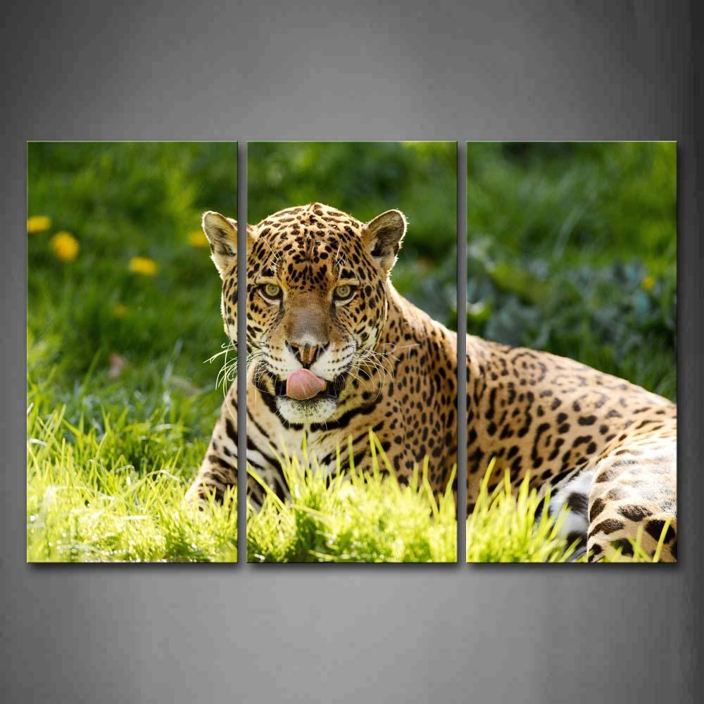 Yellow Jaguar Animal