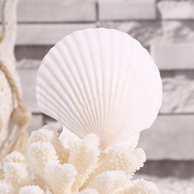 Transport gratuit (5pcs / lot) Big White Scallop Natural Shell & Conch Pagina de decorare Acvariu Peisagistica Nunta Peisaj Decoratiuni