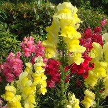 Bonsai flower Garden Balsam seeds planting snapdragon seeds potted flowers Outdoor plant 30pcs
