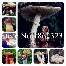 Big Sale 200 Pcs Delicious Giant Mushroom bonsai Green Vegetables Bonsai plant Very Easy To Grow For Home Garden planting(China)