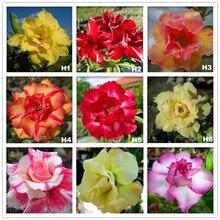 12pcs Adenium Obesum Desert Rose Bonsai Flower Seed