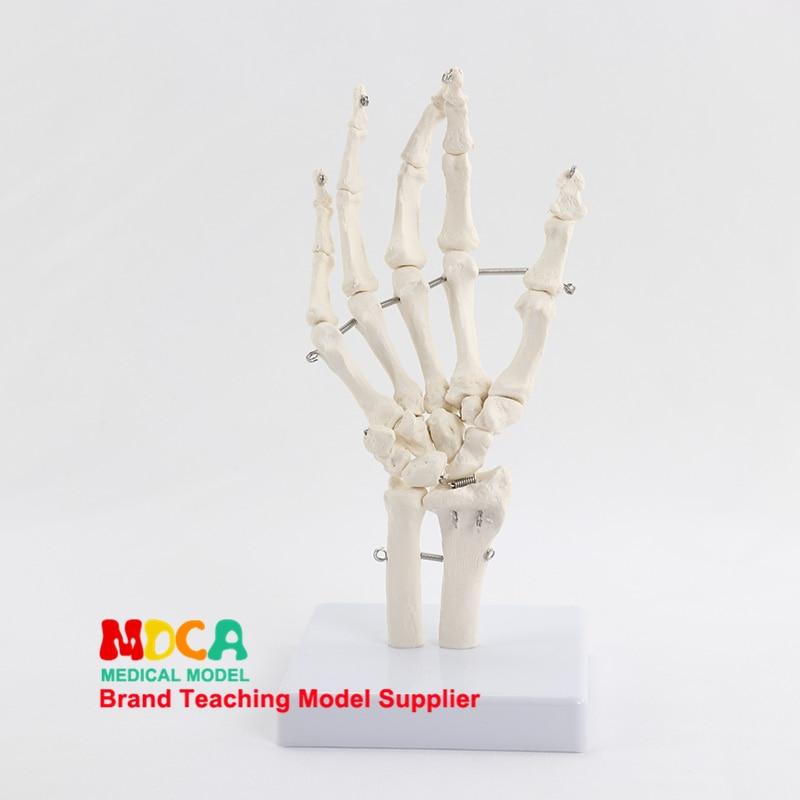 Flexible Hand Joint Model Hand Bone Model Finger Bone Metacarpal Skeleton Medical Teaching MSG003