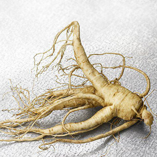 ZLKING 50PCS Ginseng Bonsai Plants For Home Garden Rare Perennial Fragrant Plants Supernatural Products Natural Herbs 2