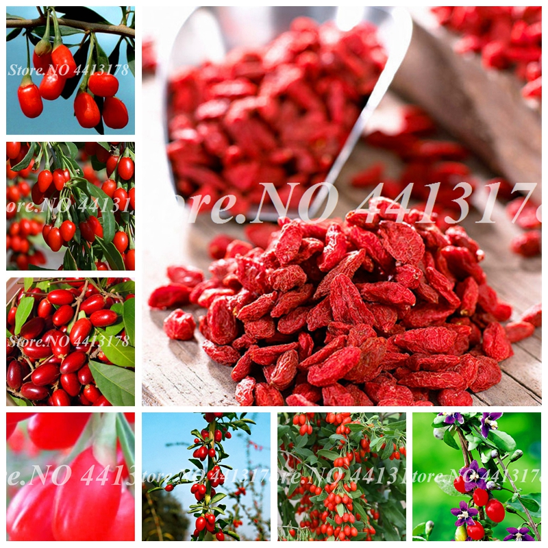 1000 Pcs Red Goji Berry Outdoor Wolfberry Organic Heirloom Fruit For Garden Diy Lycium Chinense Herb Potted Plant Benefit Medlar