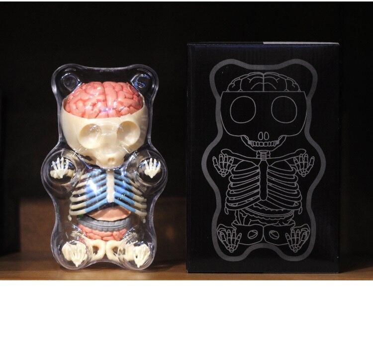 Dental lab Dentist 4D master Gummy Bear Anatomy Medical skull model ...
