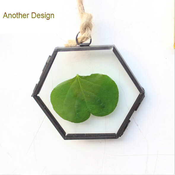 Plant specimens frames figurines home decor all hanging glass frames ...