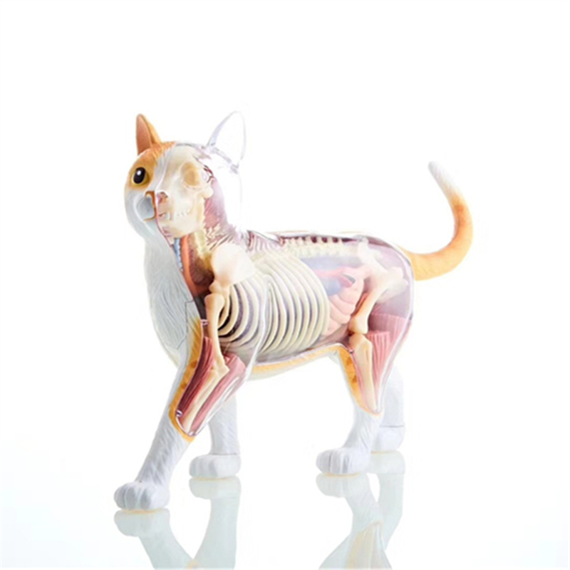 4D Orange Yellow Cat Intelligence Assembling Toy Animal Organ Anatomy Model Medical Teaching DIY Popular Science Appliances