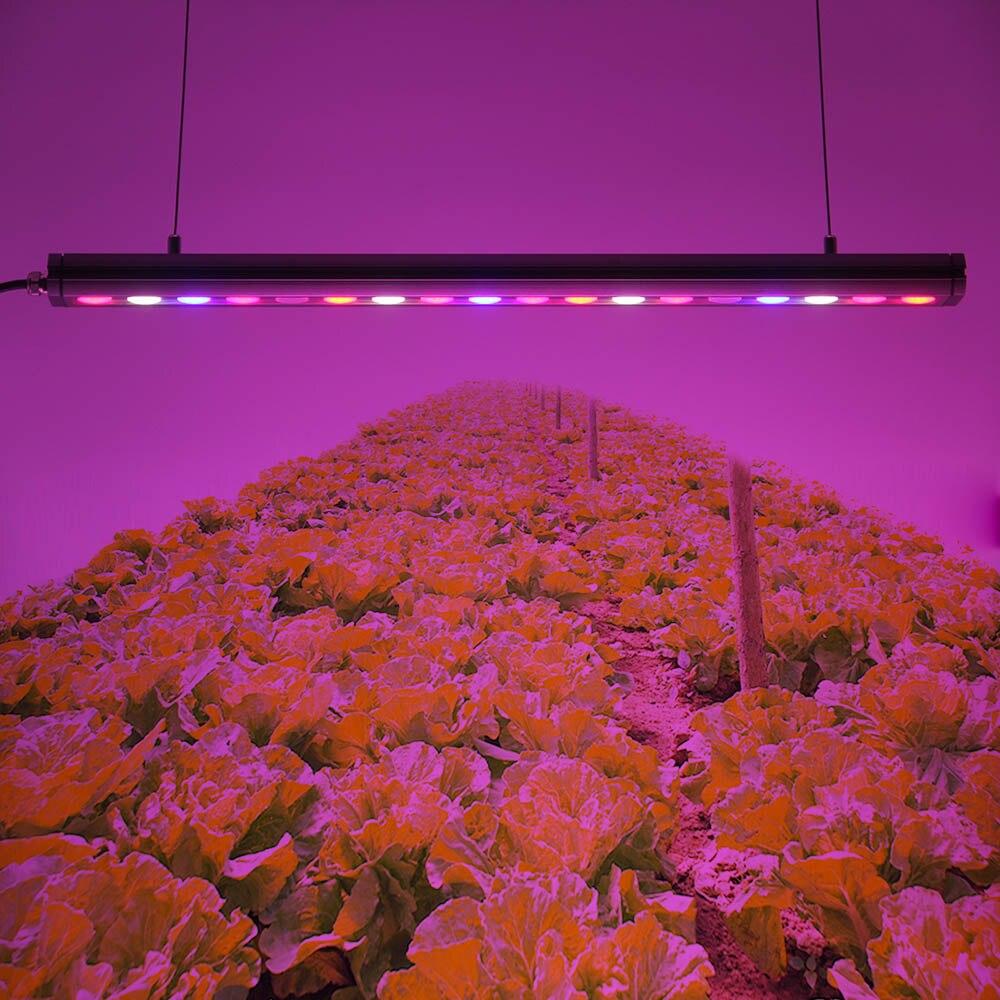 2019 bricolage plante d'intérieur bande de spectre complet étanche CE Rohs a mené la lumière 30 watts pour cultiver des plantes de tente