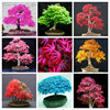 20 Pcs -7 kinds Rare Japanese Maple Seeds,Bonsai Tree Seeds,suit for DIY Home Garden, Free Shipping