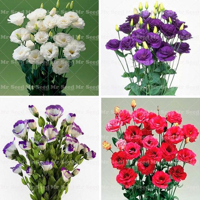 100pcs rare eustoma plant perennial flowering plants balcony potted